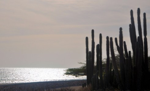 Cacti silhouette against sunshine-on-sea, Arashi Beach - August 15, 2013