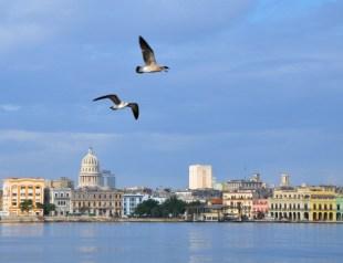 Havana waterfront from Regla, w gulls-12-17-11