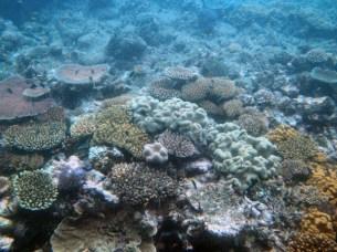 Michaelmas Reef, Great Barrier Reef 5-19-07
