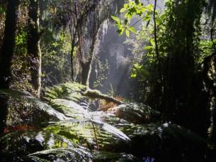 Rainforest - Lake Matheson – Westland Tai Poutini NP 4-12-07