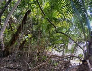 The rainforest meets the beach, Myall Beach, Daintree NP 5-20-07