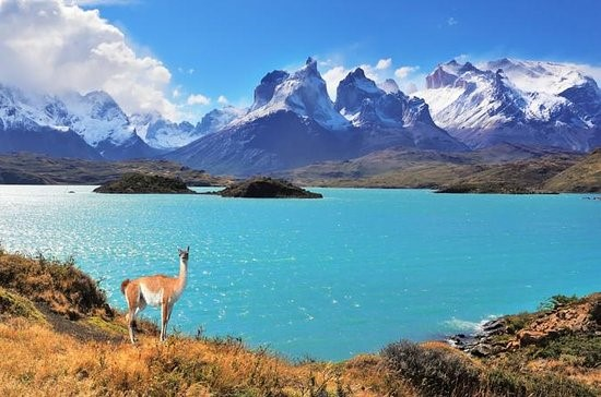 Llama-fiord-Andes